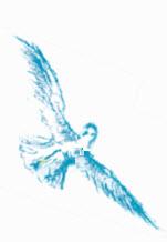 Illustration Möwe rechts