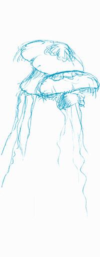 Illustration Quallen